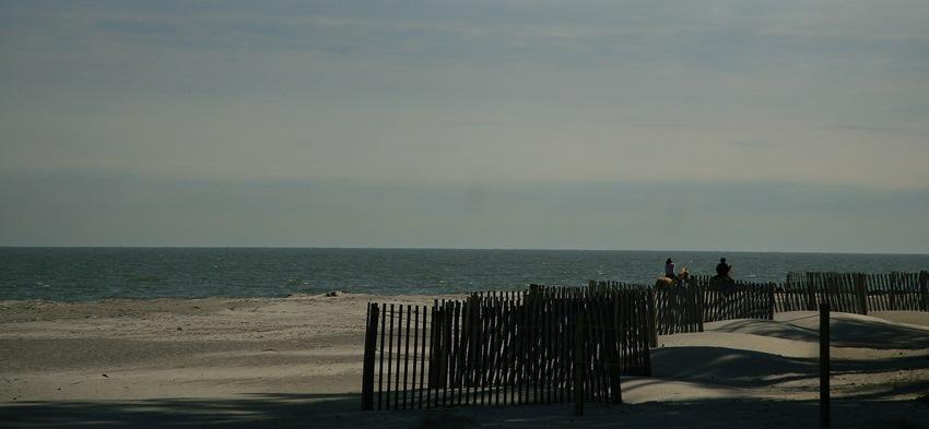horses on the beach 1