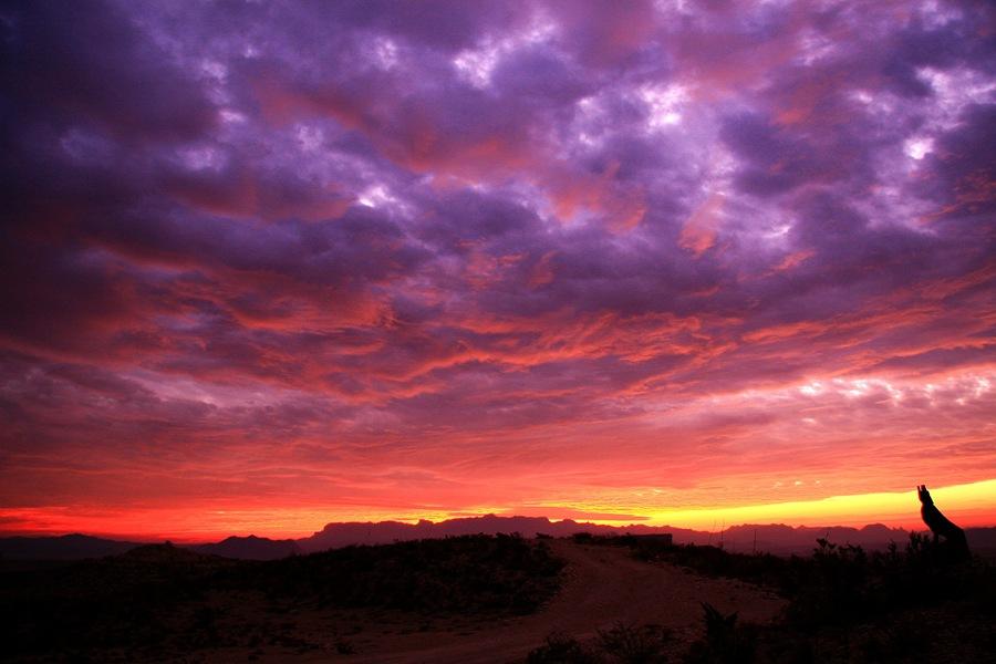 sunrise SM UA