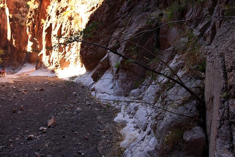 canyon h