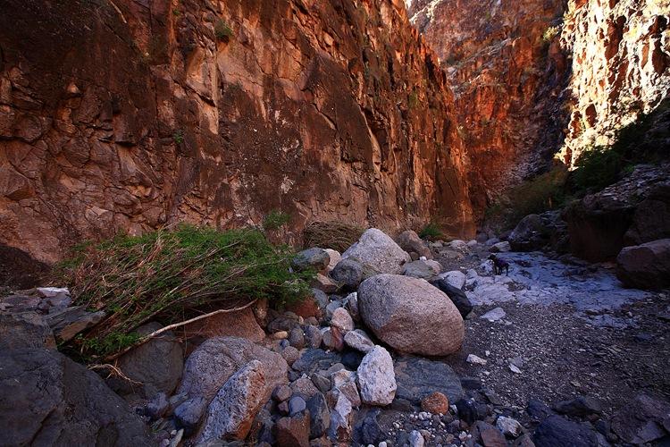 canyon j
