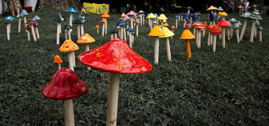 mushrooms b