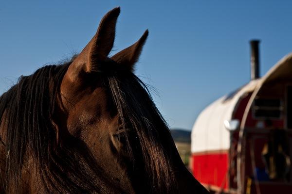 Ron's horse
