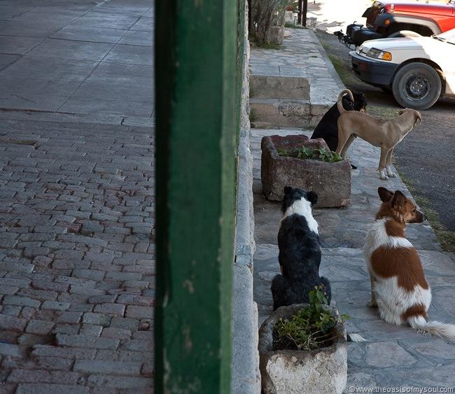 Doug's Dogs