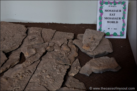 Mosasaur stomach