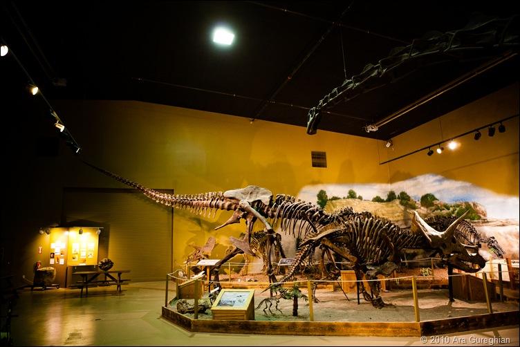Dinosaur Museum-9