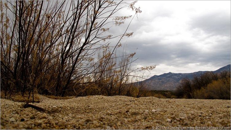 Catalina State Park-13