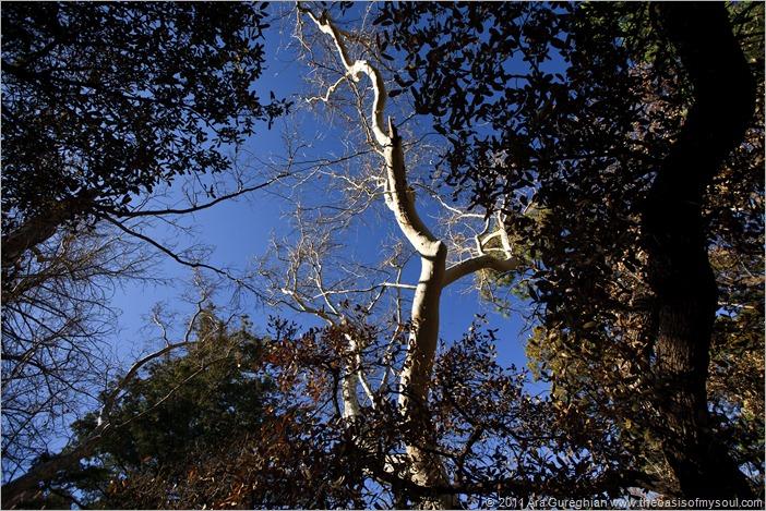 Chiricahua Mountains-8
