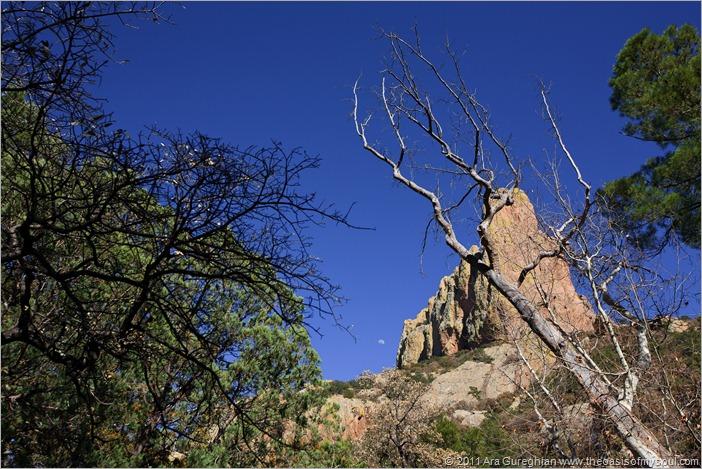 Chiricahua Mountains-9