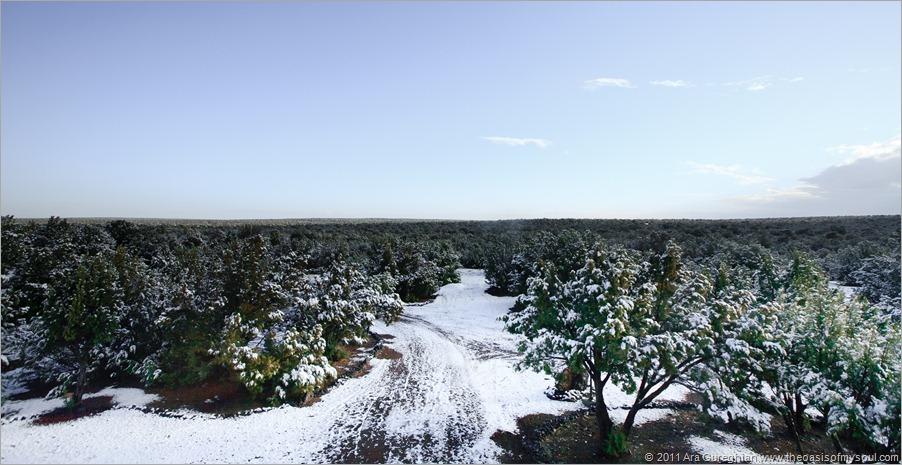 Snow...-6