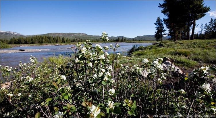 Grassy Lake Road camping-3