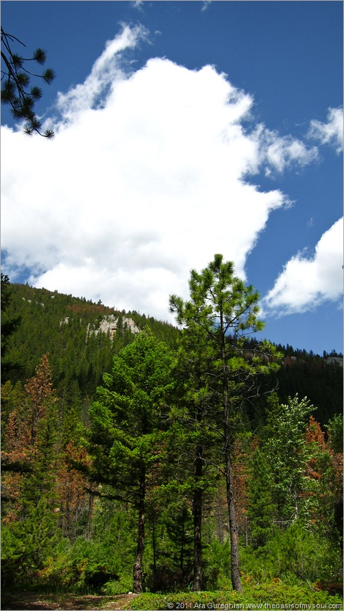 Logging Creek-11
