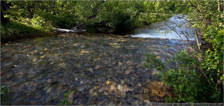 Logging Creek-24