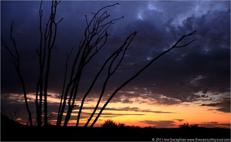 Anza Borrego Desert-8 d