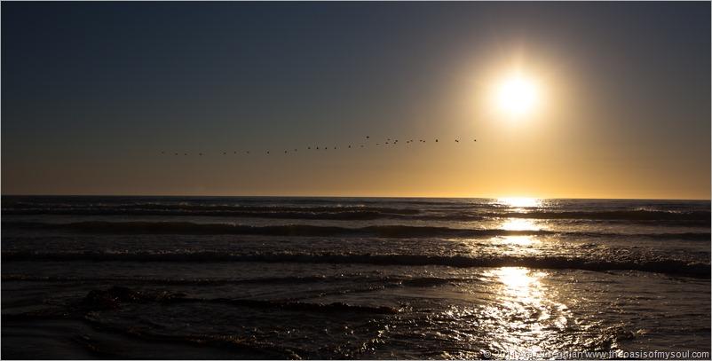 Pismo Beach-3 d