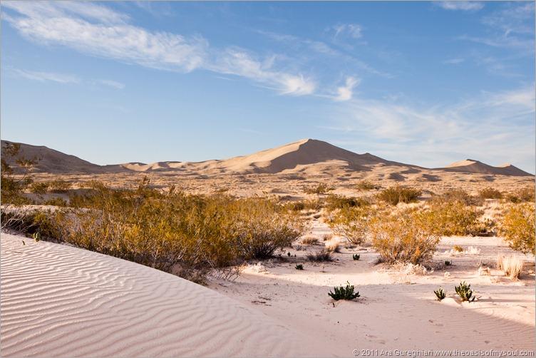sand dunes-13 xx