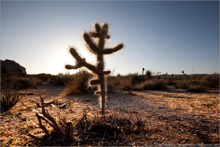 sand dunes-16 xxx