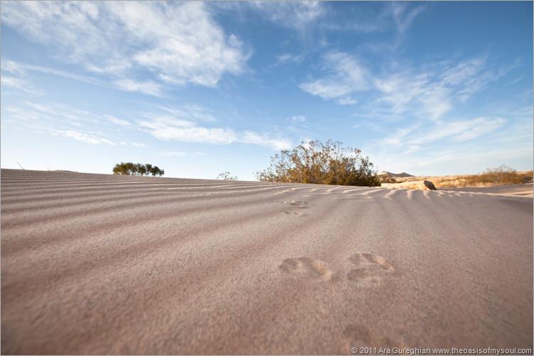 sand dunes xxx
