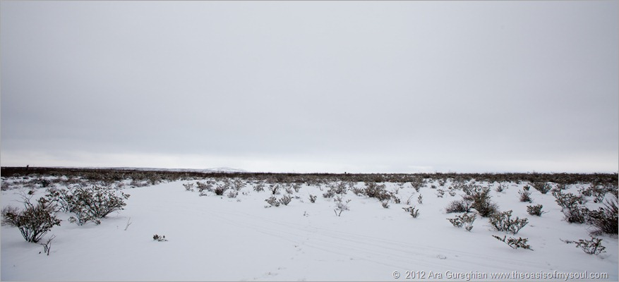 Snow-25 xxx