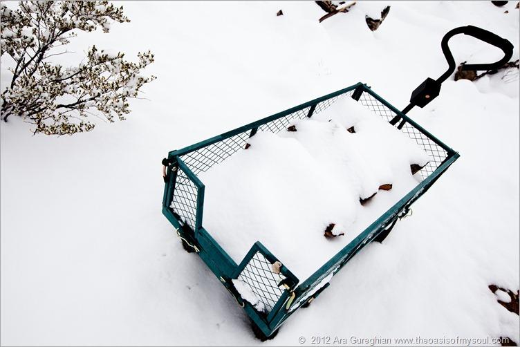 Snow-29 xxx