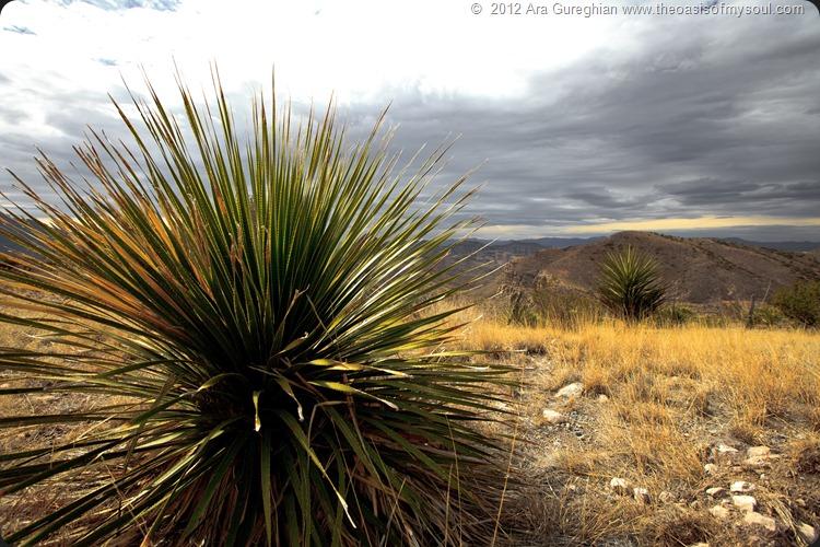Pinto Canyon-6 xxx