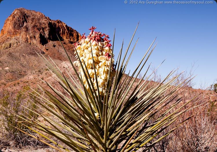 Santa Elena Canyon-20 xxx