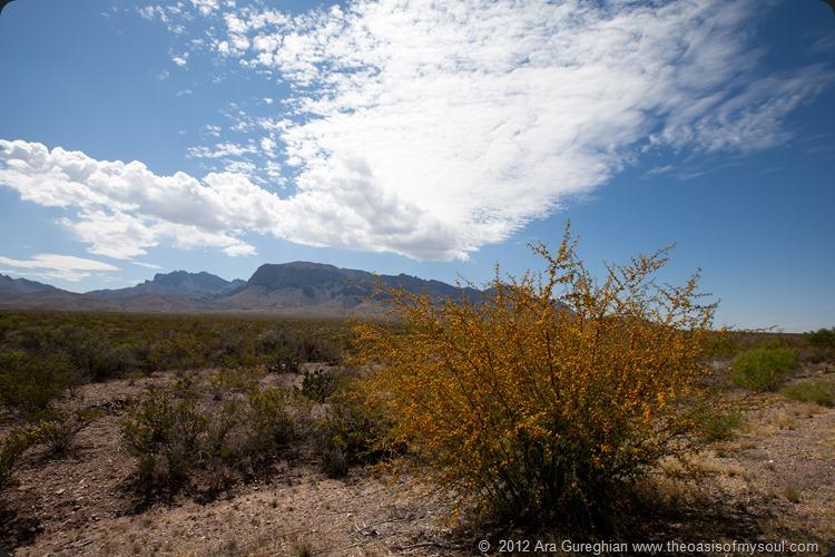 Desert Flowers xxx