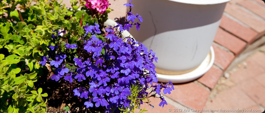 Flowers-10 xxx