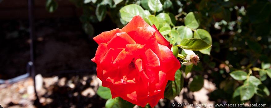 Flowers-12 xxx