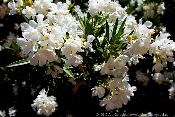 Flowers-20 xxx