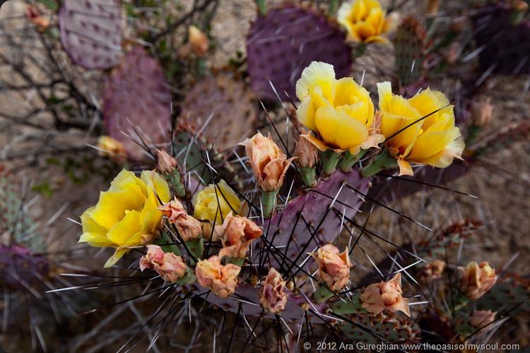 Flowers-4 xxx