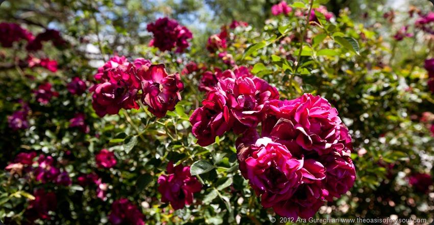 Flowers-5 xxx