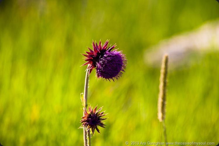 Flowers xxx