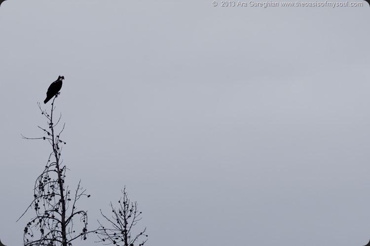Sawtooth Mountains, Idaho.-6 xxx
