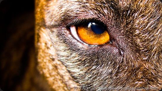 Spirit's Eye