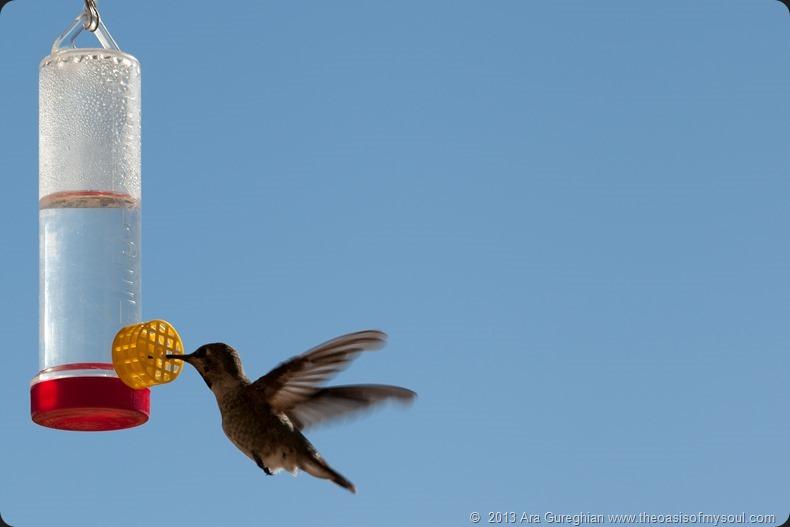 Hummingbird-2 xxx