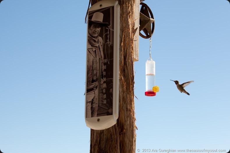 Hummingbird xxx