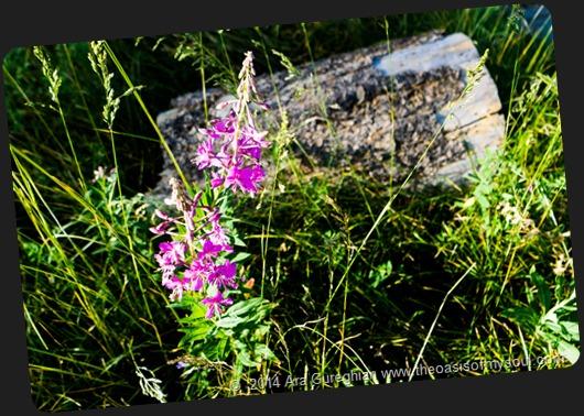 Wild Flowers-5 xxx