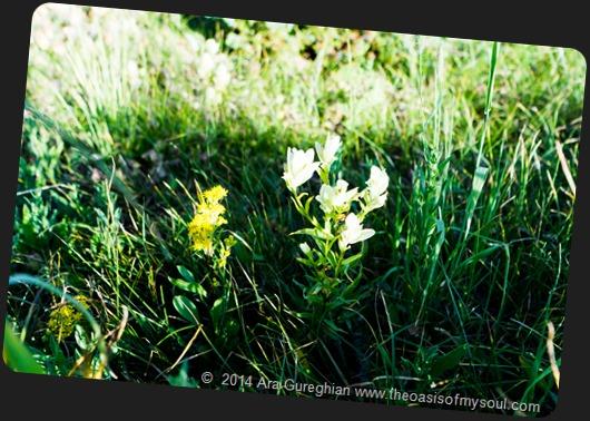 Wild Flowers-6 xxx