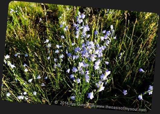 Wild Flowers-7 xxx