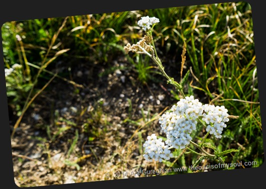 Wild Flowers xxx