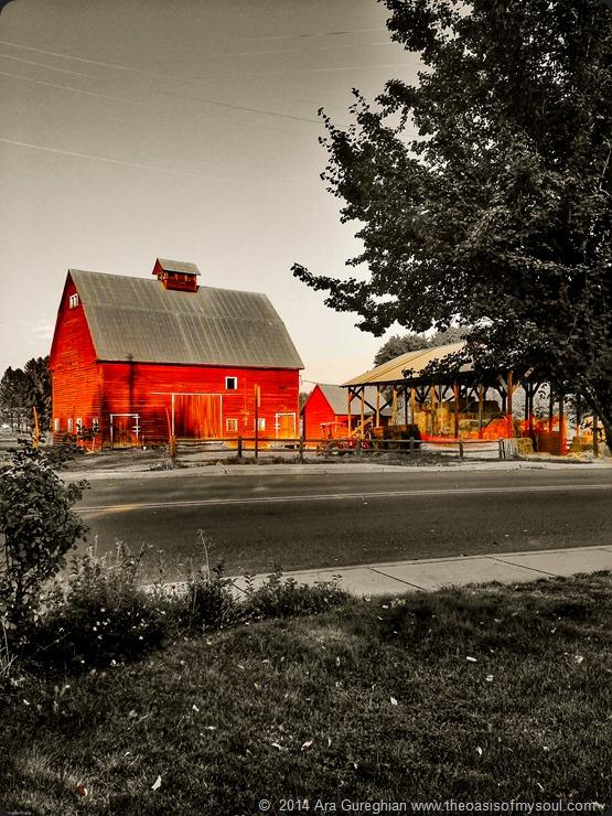 Red Barn xxx
