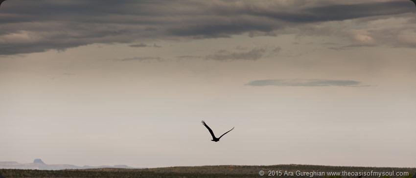 The Bird-4
