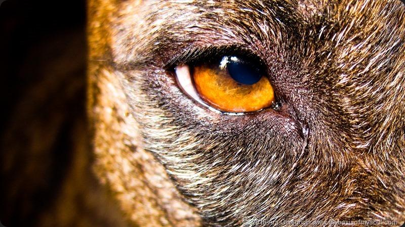 Spirit's Eye - Copy