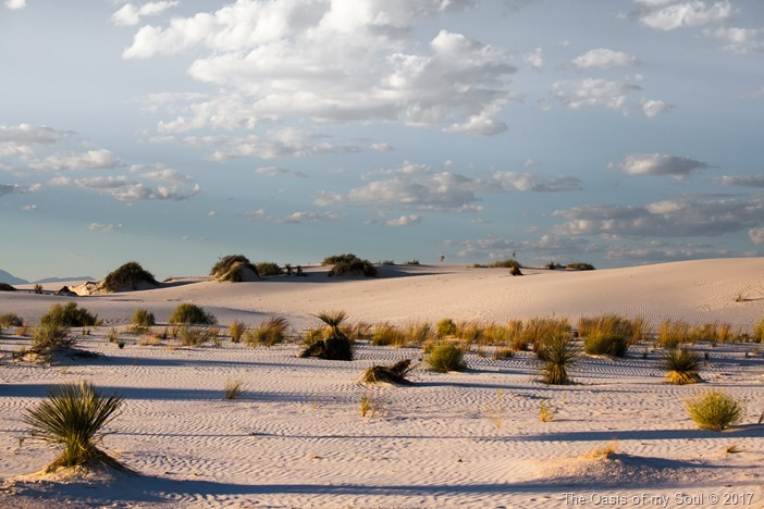 White Sand Dunes, NM-10 xxx