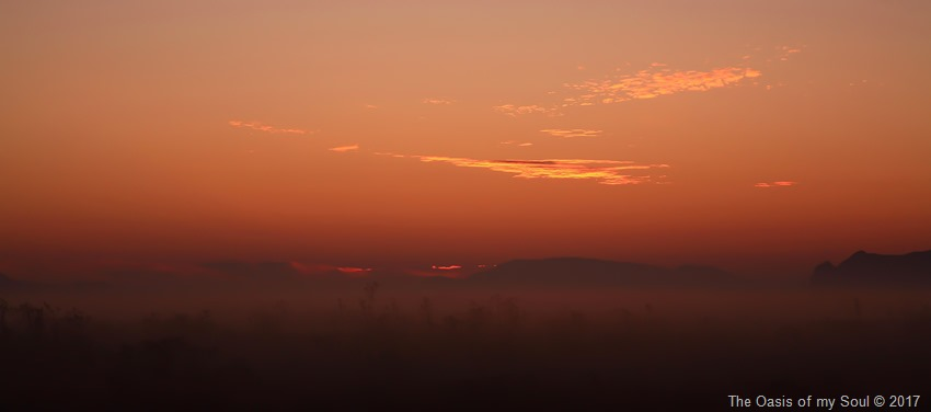 A foggy Oasis