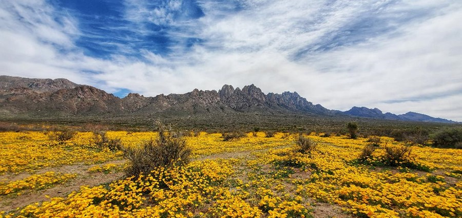 Organ Mountains 3